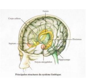 sys-limbique